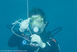BD-120420-Fury-Shoal-5742-Homo-sapiens.-Linnaeus.-1758-[Diver].jpg